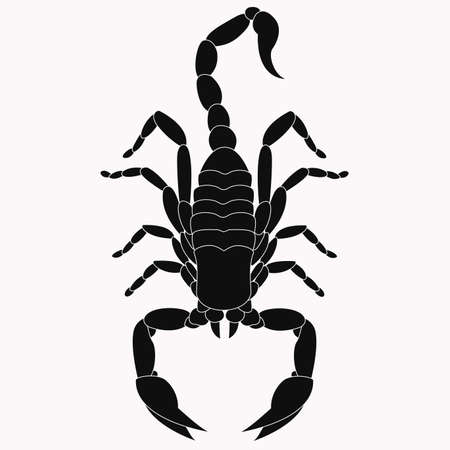 Scorpion vector icon. The symbol of November