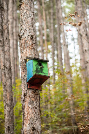 A colorful wooden birdhouse on a tree in the forest. Portrait view. 版權商用圖片