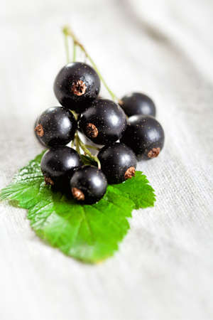black currant: Black currant on green leaf