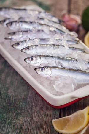sardinas: sardinas frescas en el hielo