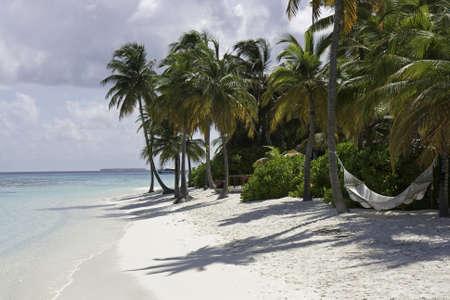 ari: Palm Tree and a Hammock, Ari Atoll, Mirihi, Maldives Stock Photo