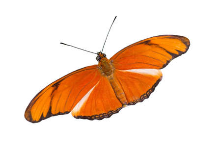 Orange Butterfly isolated on a white background Stock Photo - 7196471