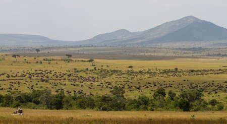 Safari during the great migration, Masai Mara Game Reserve, Kenya, Africa photo