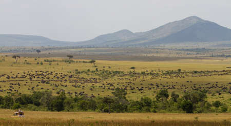 Safari during the great migration, Masai Mara Game Reserve, Kenya, Africa