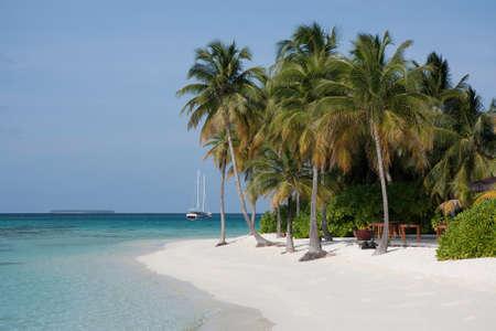 Palm Trees and White Sand Beach, Mirihi, Ari Atoll, Maldives photo