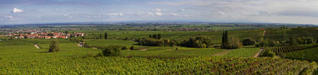 roth: Panorama of the village Roth with vineyards in the foreground, Weinstrasse, Germany