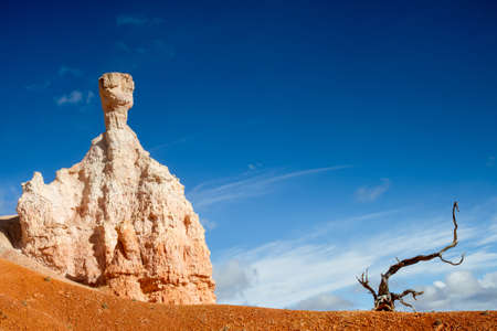 Stone gnome and a dead tree, Bryce Canyon National Park, Utah photo