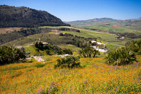Blooming Flowers in the sicilian landscape, Ancient site of Segesta, Sicily, Italy photo