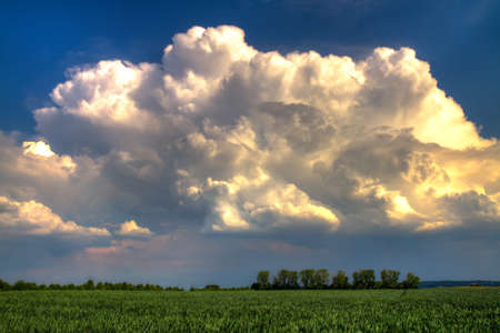 thundercloud: White Thundercloud over a green wheat field