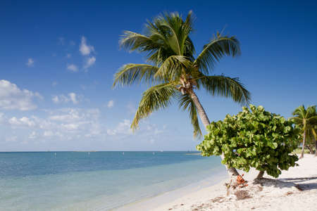 Sombrero Beach with palm trees on the Florida Keys, USA Stok Fotoğraf