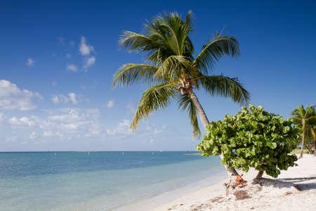 Sombrero Beach with palm trees on the Florida Keys, USA Stock Photo