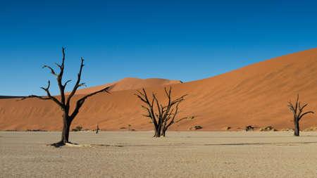 vlei: Dead trees and Red Sand Dunes, Namib Desert, Dead Vlei, Namibia Stock Photo
