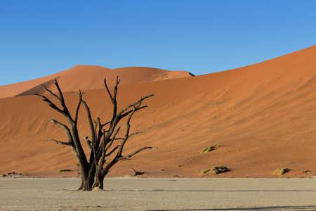 vlei: Dead tree and Red Sand Dunes, Namib Desert, Dead Vlei, Namibia Stock Photo