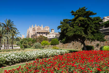 baleares: Rose garden at the cathedral of Mallorca Baleares Spain