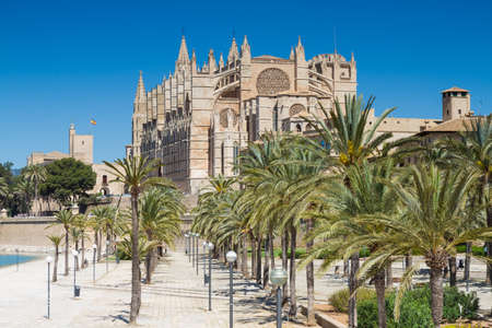 baleares: Palms in front of La Seu cathedral Mallorca Baleares Spain