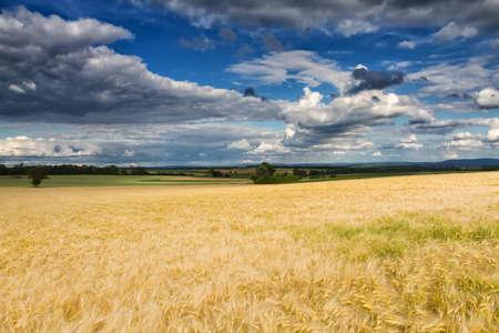 hessen: Golden wheat field under a partly cloudy sky, Wetterau, Hessen, Germany