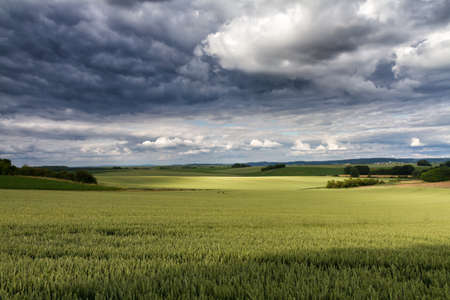 hessen: Hilly wide landscape with green barley fields, Wetterau, Hessen, Germany Stock Photo