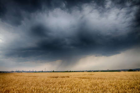 thundercloud: Huge thundercloud over a wheat field wih the city of Frankfurt in the distance, Germany
