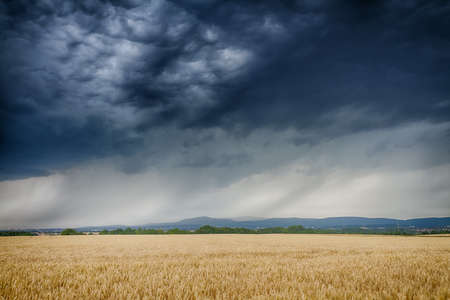 wheatfield: Thunderclouds over a golden wheat field, Wetterau, Germany Stock Photo