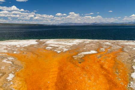 Bacteria mat at Yellowstone lake, Yellowstone National Park, Wyoming, USA