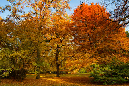 hessen: Park of Bad Homburg in autumn, Hessen, Germany