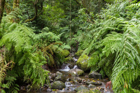rei: Creek at Levada Do Rei, Madeira, Portugal Stock Photo