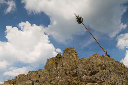 hessen: Pine tree on top of the Bilstein mountain, Vogelsberg, Hessen, Germany