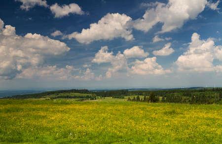 hessen: Wildflowers on a meadow of the Hoherodskopf mountain, Hessen, Germany