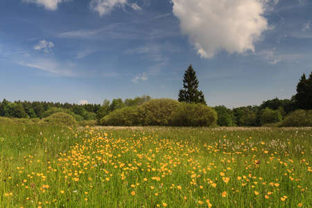 hessen: Wildflowers at a swamp, Vogelsberg, Hessen, Germany Stock Photo