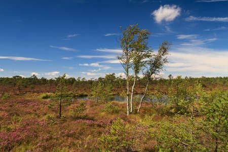 hessen: Marsh landscape at the low mountain range Rhoen, Schwarzes Moor, Hessen, Germany