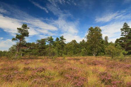 Marsh landscape at the low mountain range Rhoen, Schwarzes Moor, Hessen, Germany