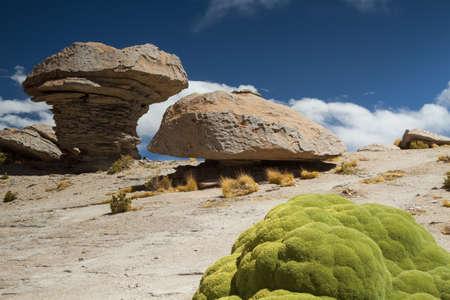 Yareta plant in the Atacama desert, Altiplano, Bolivia. Stock Photo