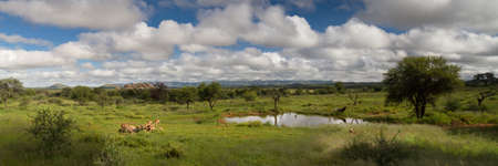 Panorama of a water hole in the namibia savanna near Windhoek, Namibia, Africa