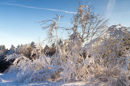 Trees in the snow at the top of the Feldberg, Hesse, Germany 스톡 콘텐츠