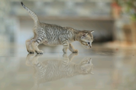 Cute kitten looking down with its reflection Standard-Bild