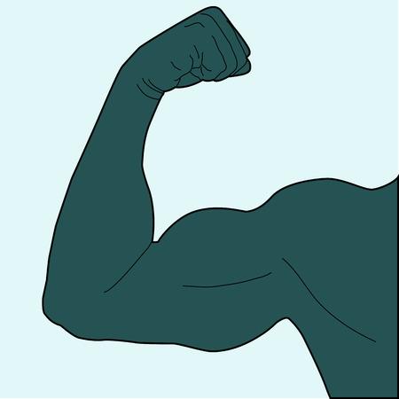 arm muskeln: Armmuskulatur Mannes Illustration