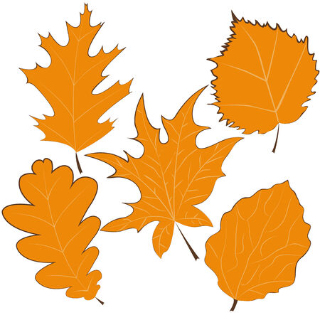 Dibujado a mano hojas de oto�o. Ilustraci�n vectorial
