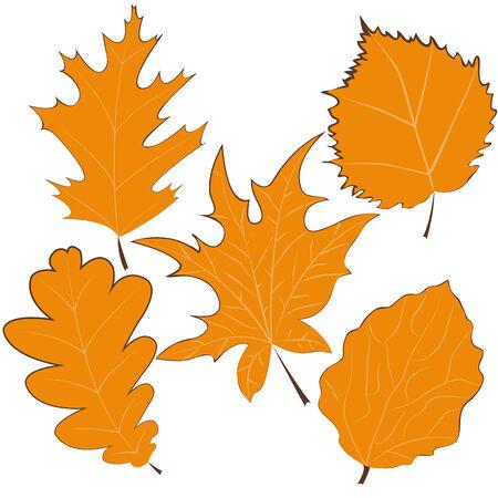 El sonbahar yaprakları çizilmiş. vektör çizim