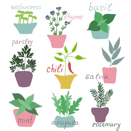 french produce: Set of hend drawn herbs spices isolated. Illustration