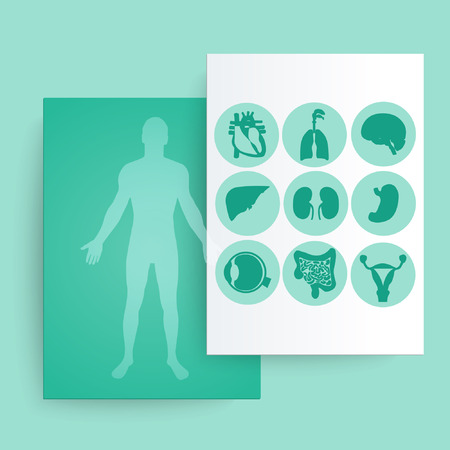 Silhouette of a man and internal organs. Vector illustration. Vector