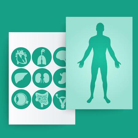 Bir adam ve iç organların siluet. Vector illustration.