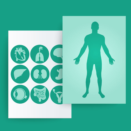 medical laboratory: Silhouette of a man and internal organs. Vector illustration. Illustration
