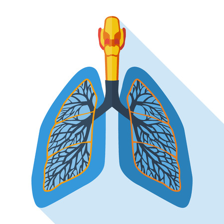 transplant: Flat design icon of human lungs. Vector illustration.