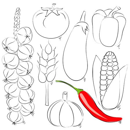garden stuff: Assorted vegetable vector illustration. Hand drawing sketch