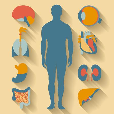 Appartamento icone del design per tema medico. Anatomia umana, vasta collezione di organi umani Archivio Fotografico - 37885224