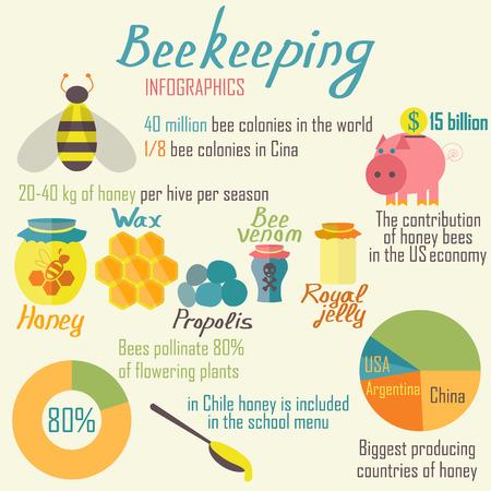 Infographics beekeeping. Vector illustration. Illusztráció