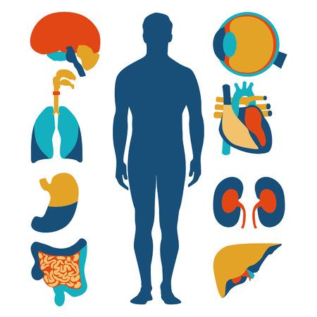 Flache Design-Ikonen für medizinischen Thema. Anatomie des Menschen, riesige Sammlung von menschlichen Organen