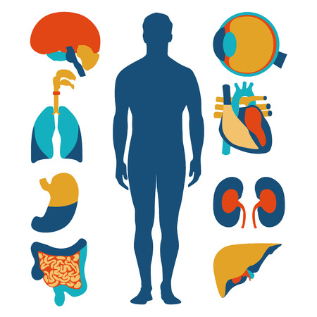 Flat design icons for medical theme. Human anatomy, huge collection of human organs Stok Fotoğraf - 37885328