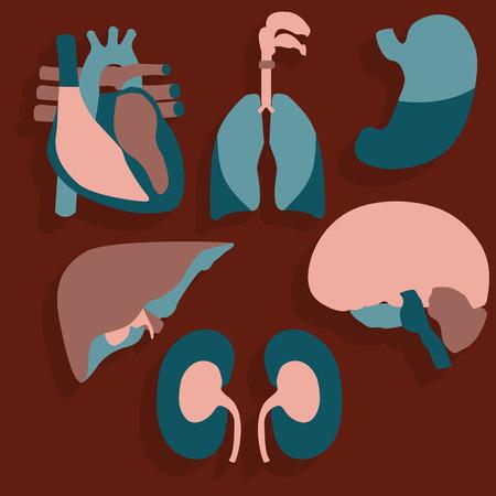 Tema médico, órganos humanos