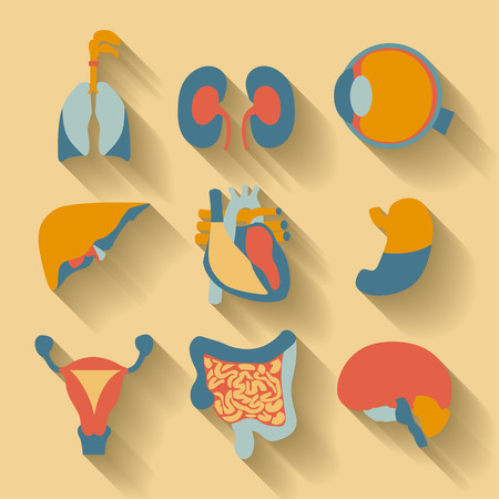 anatomy body: Set of icons for medical theme, human organs Illustration